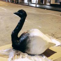 swan2.jpg