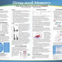Stress and Memory - how stress influences memory consolidation